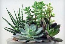 IDEAS | Plants / Bring the outdoors in this Summer!  ---  Amenez le jardin a l'intérieur cet été!