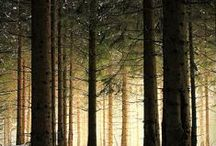 Forest Love / by Modern Day Love Poet