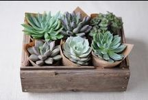 Plants & Succulents / Well okay, mostly succulents.