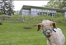 Working Farm B&Bs / Get a taste of life on a farm at these unique B&Bs located on orchards, gardens, and farms.