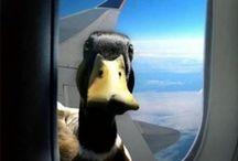 Alle meine Ente