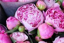 Beautiful Blooms  / by Ali Haigis