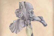 Botanicals / Visual Arts / by Craftori - arts . crafts . vintage