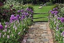Ideas for my new Garden / by Tina Baxter