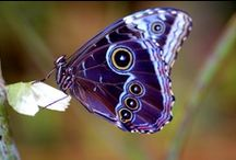 Butterfies & Moths / what i love & think are beautiful