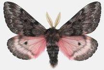 mariposas / by Paula Giovanina
