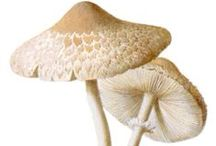 Mushrooms / by Craftori - arts . crafts . vintage
