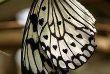 Butterflies / by Craftori - arts . crafts . vintage