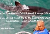 Great White Shark Conservation Volunteering - South Africa / Volunteer at the Great White Shark Project! Work alongside researchers to collect important data and work on the cage diving boat. http://bit.ly/1mPMiO3