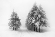 Winter Wonderland / I love the snowy winter scenes. Pin with me and let's build a  Snowman together.