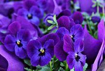 Fleurs au jardin