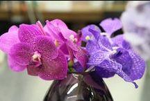 Etonnantes Orchidées / Découvrez des variétés d'orchidées toutes plus incroyables les unes que les autres !