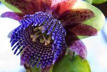 Fleurs insolites