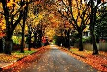 Fall- Winter  / by Manda Guinn