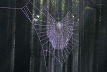 spiderwebs... / by Pamela Waddell