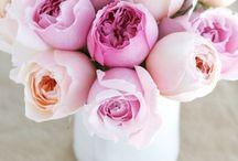 flowers / by Stephanie Heim
