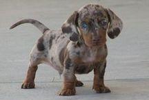 puppy puppy puppy / by erin frederick