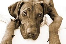 dogs dogs dogs / by Ebru NAMLI ( bEN  ヅ )