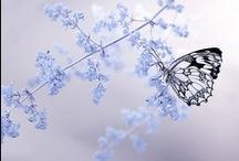 ✿ natural  beauties ✿ / by Ebru NAMLI ( aynikki ヅ )