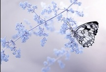 ✿ natural  beauties ✿ / by Ebru NAMLI ( bEN  ヅ )