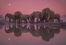 Elephants / by Michael Lassell