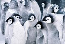 Birds / by Michael Lassell