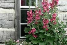 Gardens - plants / by Alice Kennedy