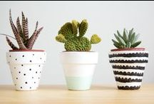 succulents / by Melissa Bazley