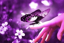 BUTTERFLIES / ...Are Free To Fly....