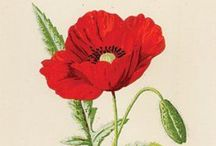 Artistic Botanical Illustration / The art of botanical illustration.