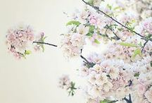 F L O W E R S / The most beautiful flower arrangements