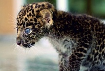 Animals of the wild.....& not so wild!!