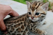 Cats & Kittens...