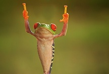 Froggies...