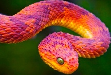 Snakes & Lizards