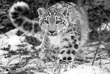 Wildcats...