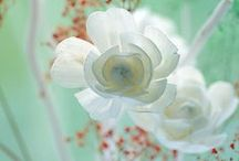 flowers / flower photography