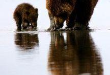 animals / animal/wildlife photography