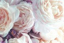 light pretty romantic / by Emily Mary