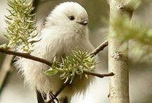 BIRDS / About birds