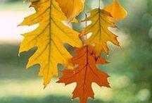 Seasonal: Autumn