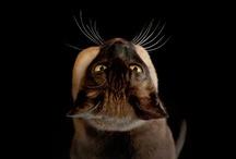 I Love Cats! / by Kelly Taylor