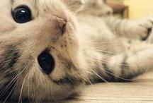 Felines. / I'll always remember my most favored feline: Lisa Marie | 1.11.13 <3