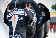elephant / by Kate VanPetten