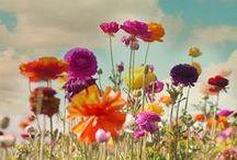 garden / by bozontee