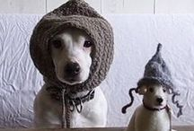 pets with hats
