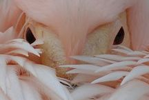 pink birds / flamingos galore