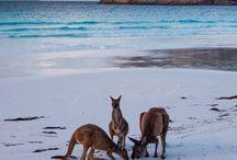 Wanderlust - Australia