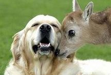 Cute Animal Pics and Pet Ideas / by Cheryl Morrison