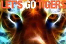 Detroit Tigers / by Cheryl Morrison